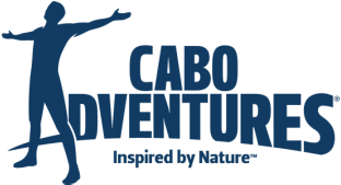 cabo adventures