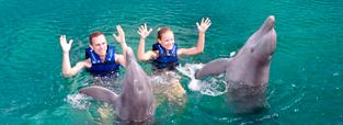 promocion-nado-con-delfines-couples-delphinus.png