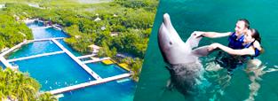 promocion-nado-con-delfines-parque-xel-ha-delphinus.png