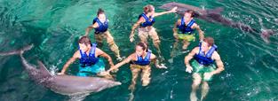 promocion-nado-con-delfines-primax-delphinus.png