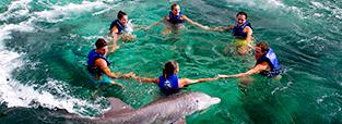 promocion-nado-con-delfines-trainer-for-a-day-delphinus.png