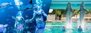 deals-swim-with-dolphins-aquarium-cancun-delphinus.png