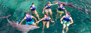 deals-swim-with-dolphins-primax-delphinus.png