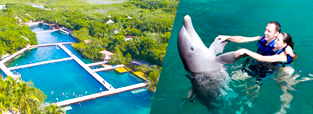 deals-swim-with-dolphins-xel-ha-park-delphinus.png