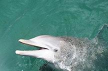 xcaret-nado-con-delfines-siij.jpg