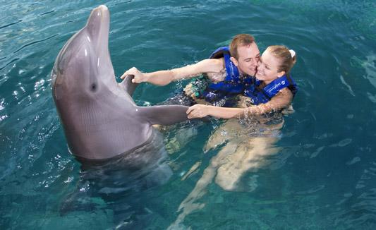 Nadar con delfines en pareja - Delphinus