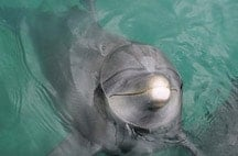swimming-with-dolphins-in-riviera-maya-fanny.jpg