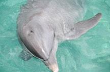 swimming-with-dolphins-in-riviera-maya-kuna.jpg