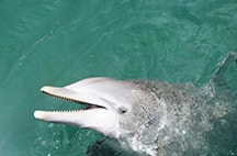 swimming-with-dolphins-in-riviera-maya-siij.jpg