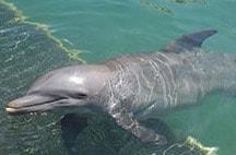 swimming-with-dolphins-in-riviera-maya-tosha.jpg