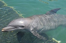 swimming-with-dolphins-in-riviera-maya-tosha.jpg