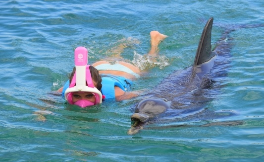 Snorkeling with dolphins caribbean