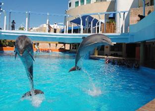 Swim with dolphins in Aquarium Cancun, Mexico - Delphinus