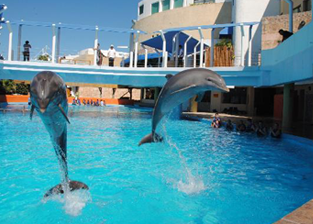 Swim with dolphins in Aquarium Cancun, Mexico - Delphinus