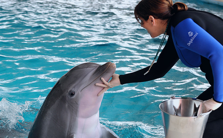Swimming with dolphins in Mexico Cancun riviera Maya