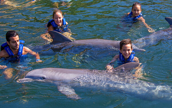 What do I need to know before swimming with dolphins