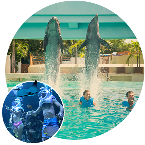 acuario-de-cancun-Delphinus.png