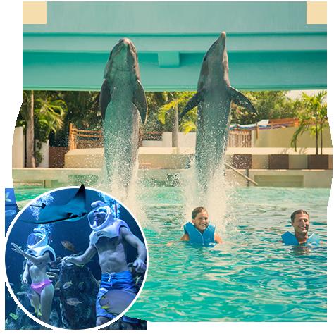 interactive-aquarium-cancun-Delphinus.png