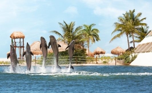 swim-with-dolphins-in-mexico-delphinus-hyatt.jpg