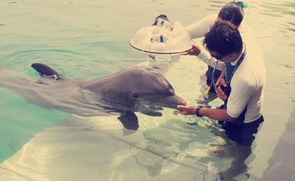 Diagnosis Clinic Delphinus