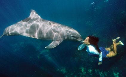 swim-with-dolplhins-in-mexico-veterinary-1.jpg