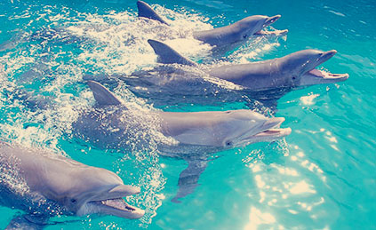best-place-to-swim-with-dolphins-in-cancun-dolphin-alimentation.jpg