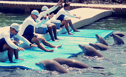 Meet our dolphins
