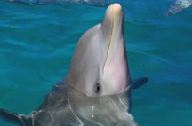 best-place-to-swim-with-dolphins-in-cancun-dolphin
