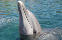 best-place-to-swim-with-dolphins-in-cancun-dolphin_2