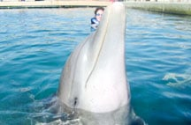 best-place-to-swim-with-dolphins-in-cancun-dolphin_3