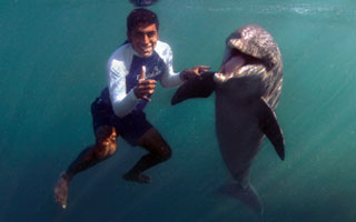 swimming-with-dolphins-in-riviera-maya-institute-animal-care.jpg