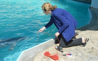 swimming-with-dolphins-in-riviera-maya-institute-investigation.jpg