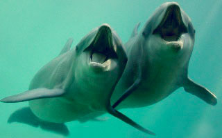 swimming-with-dolphins-in-riviera-maya-institute-reproduction-program.jpg