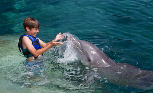 Swimming with dolphins in mexico kids delphinus voltagebd Images