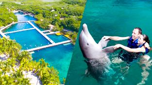 parques-en-cancun-delphinus-dolphinclusive-xel-ha.png