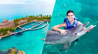 parques-en-cancun-delphinus-xcaret-dolphin-tour.png