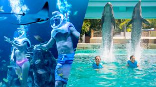 parks-in-cancun-delphinus-trek.png