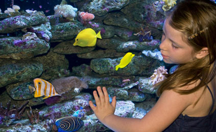 best-place-to-swim-with-dolphins-in-cancun-aquarium-tickets2.jpg