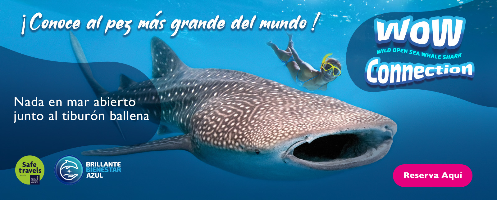 Tiburon ballena Delphinus cancun y riviera maya
