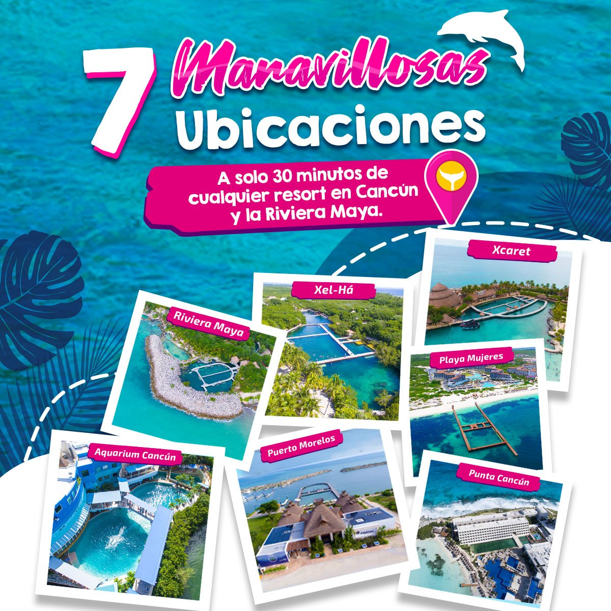 Ubicaciones Delphinus nado con delfines Cancun y Riviera Maya