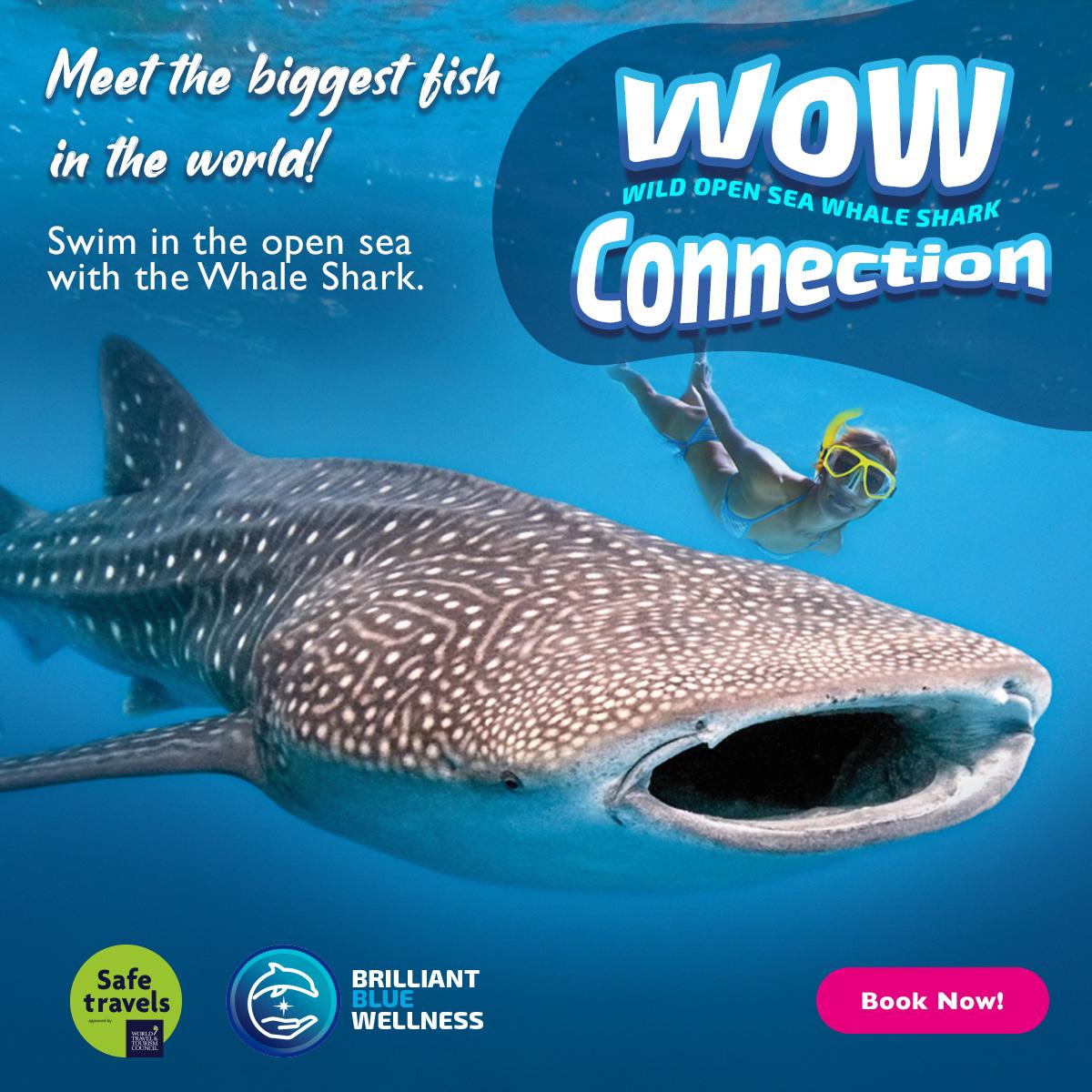 Whale Shark Delphinus Cancun and Riviera Maya