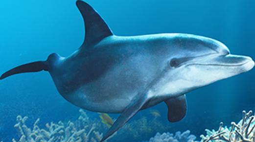 home-optimizacion-2018-v1-delfines
