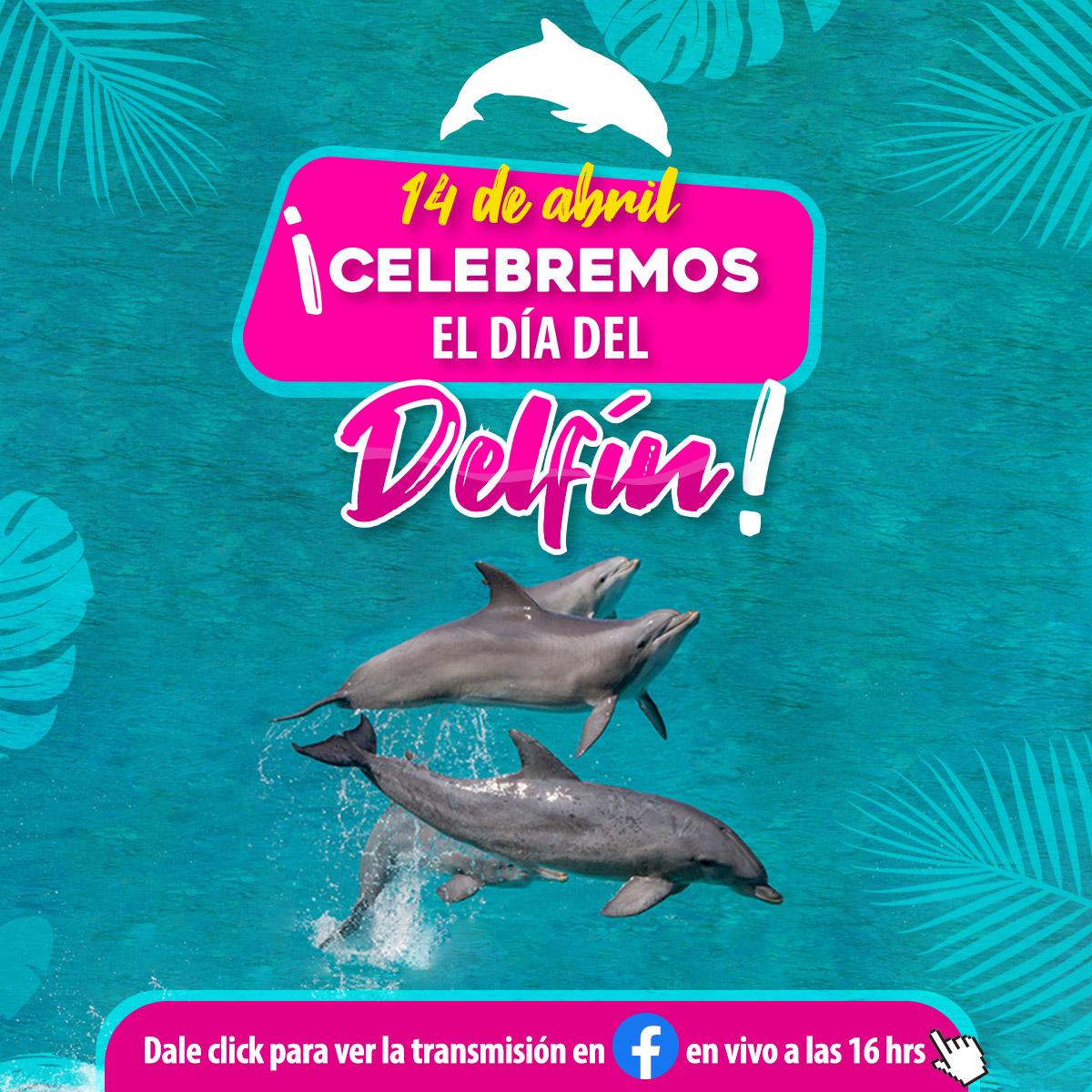 Dia del delfin delphinus nado con delfines cancun y riviera maya
