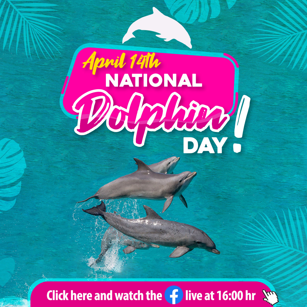 delphinus dolphins day swim with dolphins in cancun and riviera maya