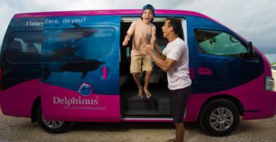 Transporte incluido - Delphinus